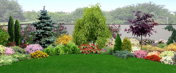 Piante da giardino sempreverdi e fiorite quali scegliere for Piante fiorite perenni da esterno