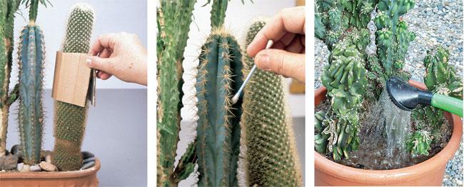 Piante grasse le cactacee fai da te in giardino for Nomi piante da giardino