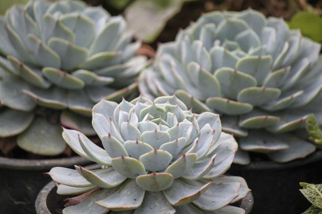 piante grasse succulente fai da te in giardino