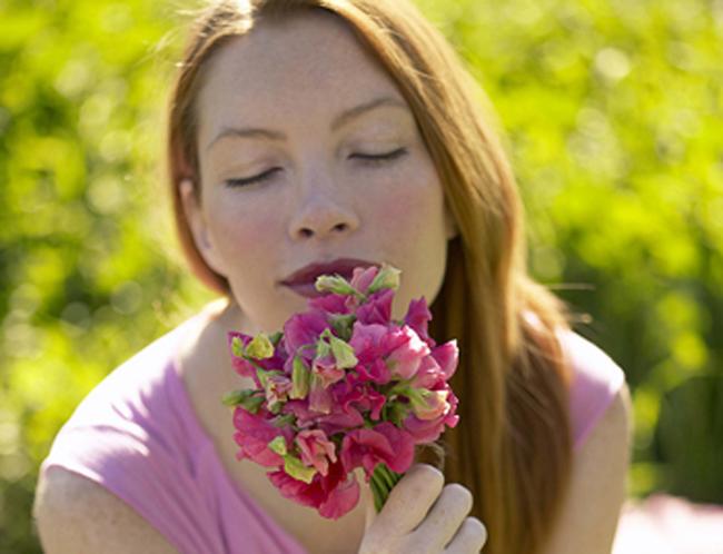 Pisello odoroso   Come coltivarlo