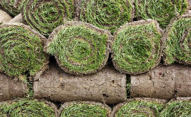 Prato a rotoli fai da te in giardino for Prato erboso a rotoli
