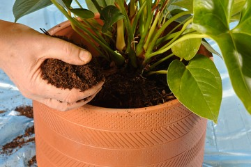 rinvasare-piante