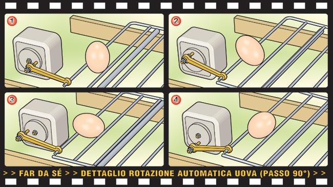 rotazione uova pulcinii