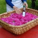 Sciroppo di rose | Ricetta illustrata passo-passo