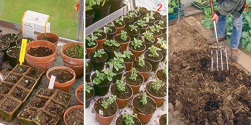 foto di coltivazione di ortaggi in serra