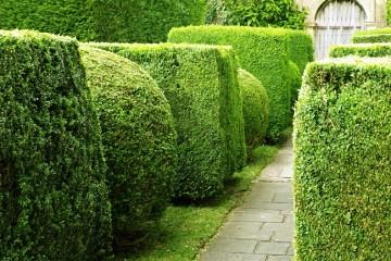 Fai da te in giardino il tuo giardinaggio spiegato passo for Piante siepe sempreverde