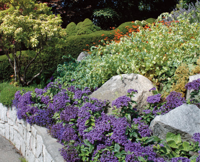 Piante Di Erba : Come stabilizzare una scarpata fai da te in giardino