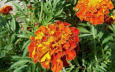 Fai da te in giardino il tuo giardinaggio spiegato passo for Coltivazione goji in vaso