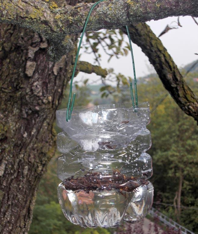 trappola per vespe fai da te con liquido aromatico fai