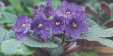 Orchidea 36 cose fondamentali da sapere fai da te in for I fiori della balsamina