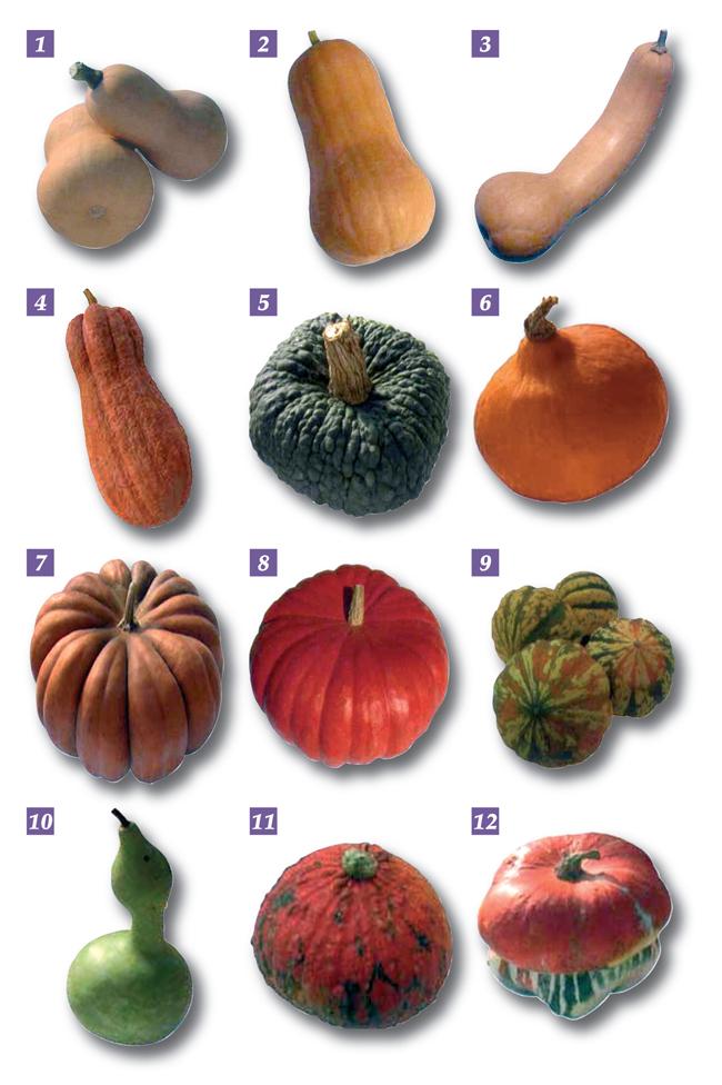 zucche, zucche ornamentali