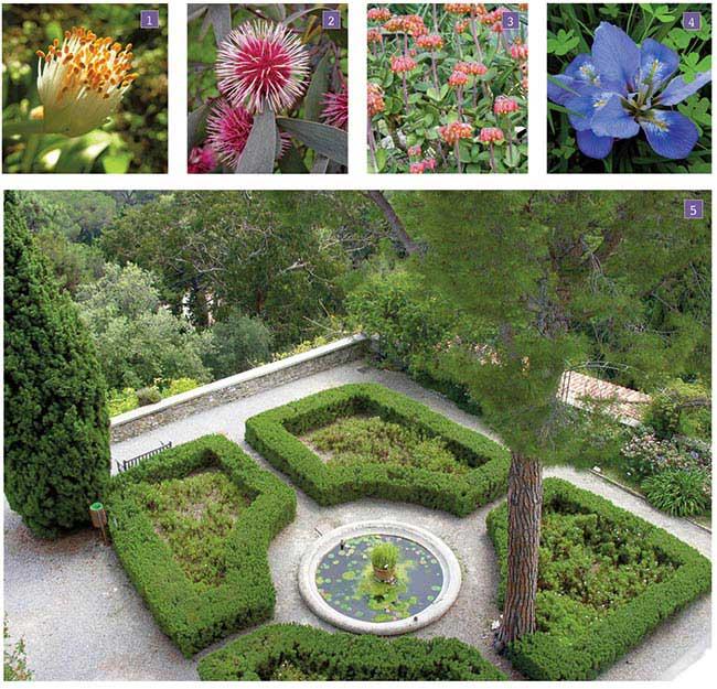 fioriture giardino botanico