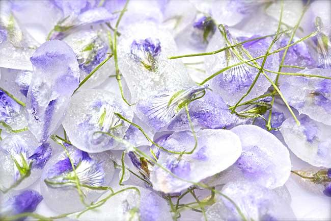 violette candite 4