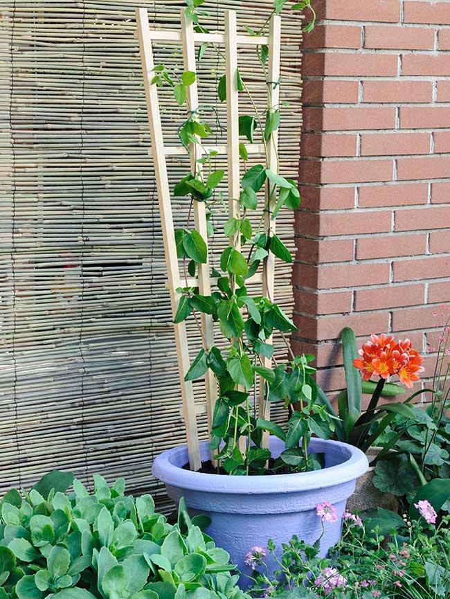 Costruire un sostegno per le piante rampicanti con tondini for Piante da giardino rampicanti
