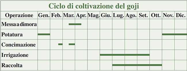 ciclo di coltivazione del goji