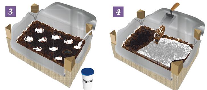 coltivazione champignon 3-4