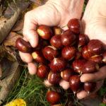 Castagne | Conservarle e preparare le caldarroste