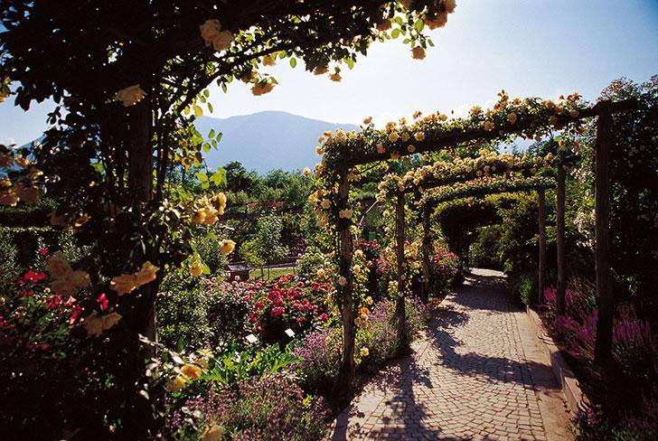 giardini sissi roseto