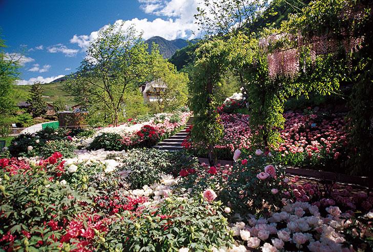 giardini sissi rose
