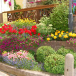 Bordura, aiuola o terrazzo: il piacere del giardinaggio