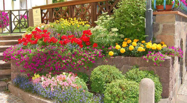 Bordura aiuola o terrazzo il piacere del giardinaggio for Piccoli giardini fai da te