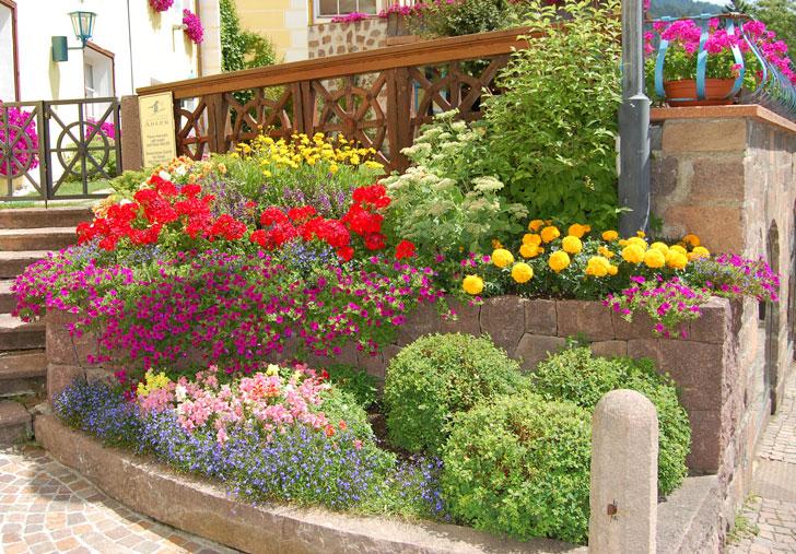 Bordura aiuola o terrazzo il piacere del giardinaggio for Piante da aiuola