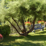 Estate in giardino: uno spettacolo