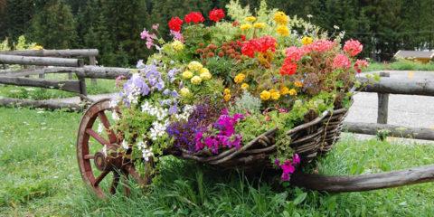 fiori-in-carriola-sfondo