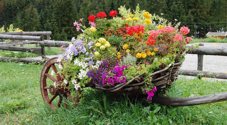 fiori in carriola per ambientazioni originali fai da te