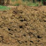 Letame: come usarlo per migliorare il terreno