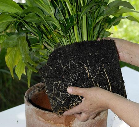 rimuovere-pianta