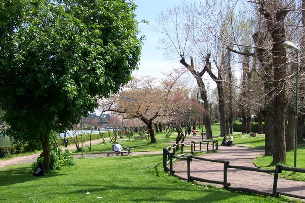 giardino giapponese bellezza eterea