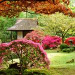 Giardino giapponese: bellezza eterea