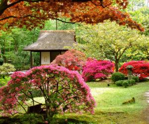 giardino-giapponese