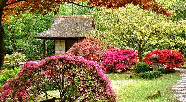 Giardino giapponese bellezza eterea fai da te in giardino for Giardino giapponesi