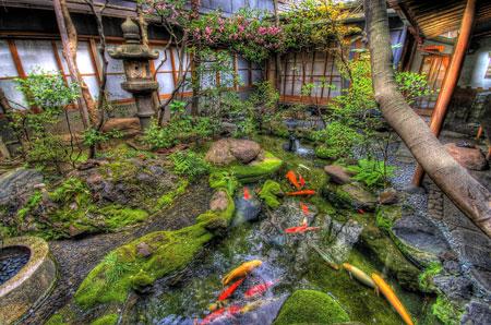 giardino-giapponese-pesci