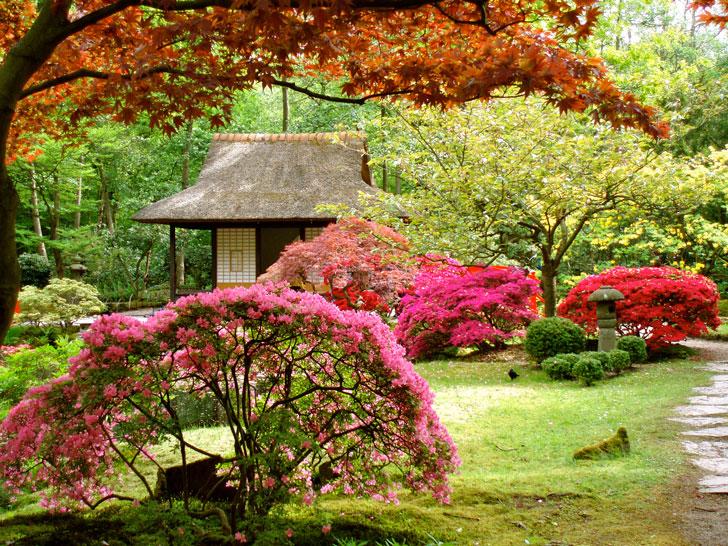Giardino giapponese bellezza eterea for Giardino giapponesi
