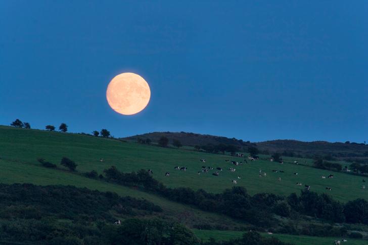 Calendario Lunare Capelli Febbraio 2020.Siamo In Luna Calante O Crescente Calendario Lunare Le