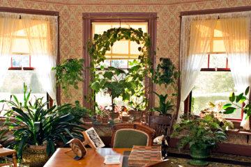 Fai da te in giardino il tuo giardinaggio spiegato passo for Piante da comprare