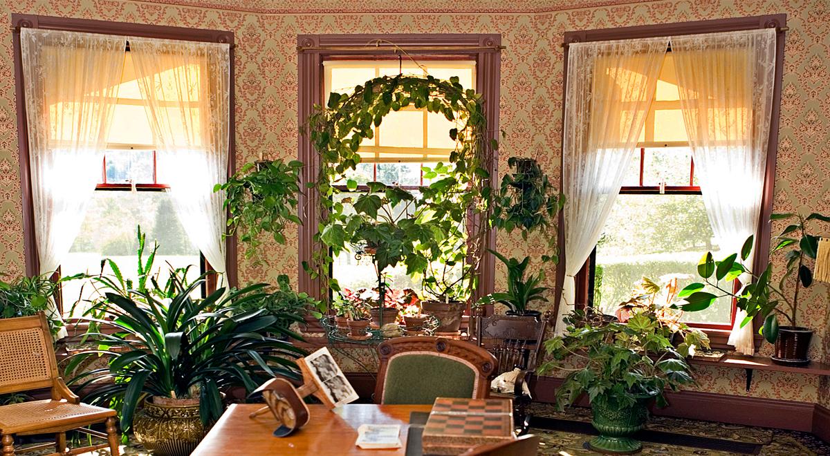 Piante da appartamento curarle in inverno fai da te in for Idee appartamento