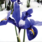Proteggere le piante dal freddo: i vari metodi