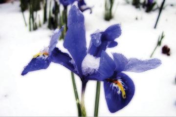 proteggere-le-piante-dal-freddo