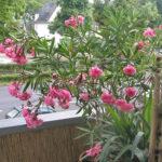 Riproduzione delle piante da appartamento