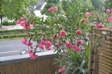 riproduzione-delle-piante