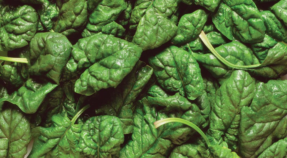 Spinaci coltivazione e cura della pianta fai da te in for Zamioculcas cura