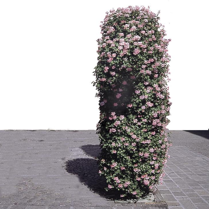 torre-fiorita