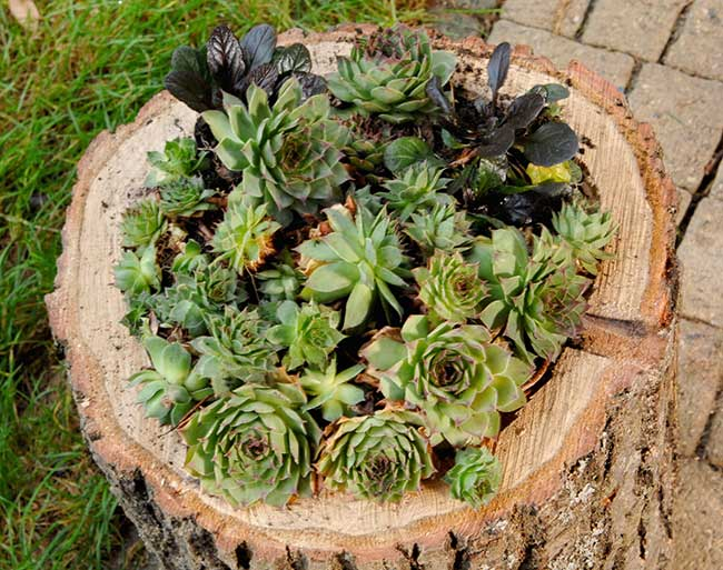 vaso in legno per piante grasse