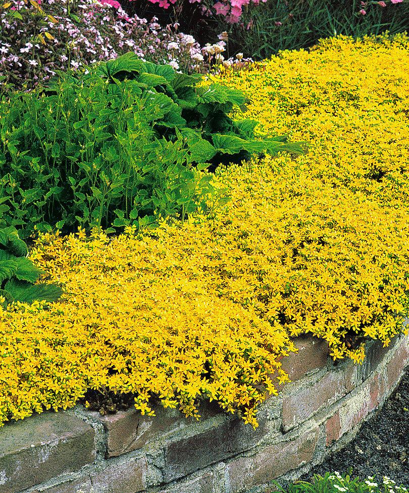 Fiori Perenni Da Balcone fiori gialli: bellissimi e diversi - fai da te in giardino