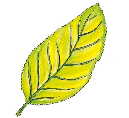 foglie-scottate