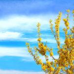 Fiori gialli: bellissimi e diversi